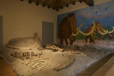 """MUSEO CIVICO DI STORIA NATURALE """"LA TERRA E L'UOMO"""""""