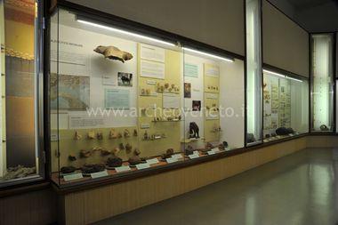 MUSEO CIVICO DI STORIA NATURALE DI VERONA