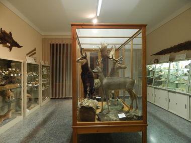 """MUSEO DIOCESANO DI SCIENZE NATURALI """" A. DE NARDI"""""""