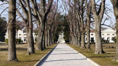 "Villa Pisani, detta ""la Barbariga"""