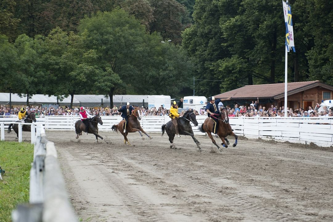 Palio di Feltre - gara equestre -  Associazione Palio di Feltre