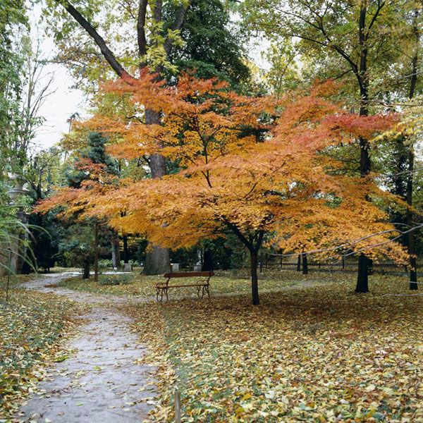 I colori dell'autunno nell'Arboretum - Crediti: Orto Botanico