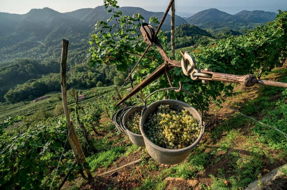 Colline di Conegliano e Valdobbiadene 02 - Crediti: Dossier di candidatura UNESCO