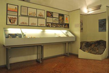 MUSEO CIVICO DI BELLUNO